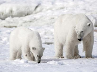 Reise in Spitzbergen, Zodiac vor einer der gewaltigen Gletscherfronten in Spitzbergen