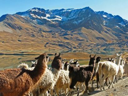 Salzwüste, Andengipfel und Lamas Landschaftlich vielfältige Trekkingreise mit optimaler Akklimatisation zu den Höhepunkten des Landes
