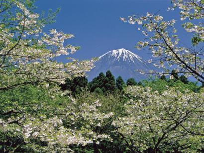 Schneeaffen, Kirschblüte und Nacktfestival Erleben Sie das noch winterliche Japan zum ersten Frühlingserwachen vor der Hauptreisezeit