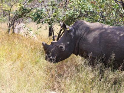 Reise in Simbabwe, Jahrtausende alte Felszeichnungen im Matobo Hills NP