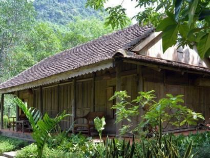 Reise in Vietnam, Rotschenkliger Kleideraffe in Baum