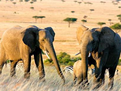 Südafrika & Mosambik - Afrika hautnah!
