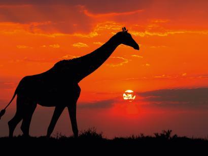 Reise in Südafrika, Südafrika: Sternstunden 2