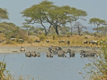 Tansania - Safari im wilden Süden (10 Tage Safari mit Übernachtung in Lodges und Tented Camps)