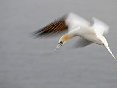 Tier- und Vogelfotografie auf Helgoland Intensive Fotoreise mit Michael Lohmann mit Fokus auf Tierfotografie, guter Einstieg in das Thema Fotoreisen