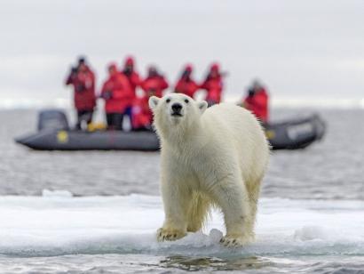 Reise in Niederlande, Eisbärbeobachtung