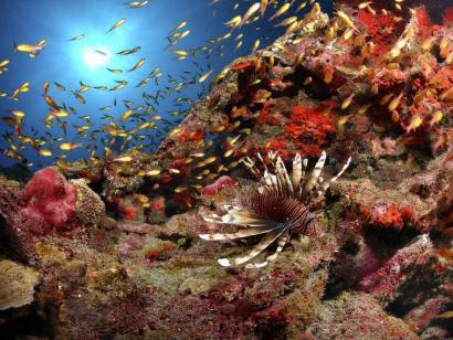 Reise in Mauritius, Unterwasserwelt auf La Reunion