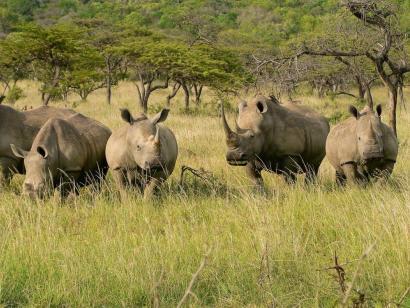 Tropische Strände und afrikanischer Busch Traumhafte Strände von Mosambik und Safari im Krüger-Nationalpark