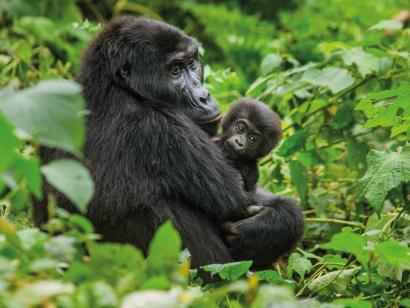 Reise in Uganda, Uganda: Höhepunkte