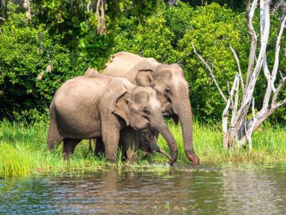 Reise in Sri Lanka, Mönch in Sri Lanka
