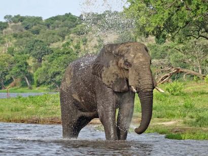 Reise in Botswana, Den Elefanten ganz nah im Chobe-Nationalpark