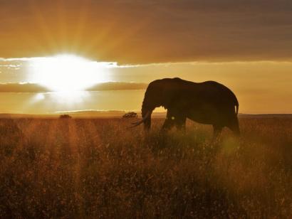 Reise in Tansania, Elefant