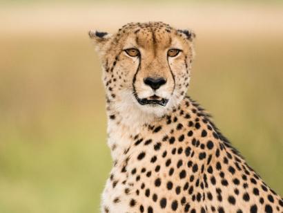 Reise in Botswana, Deadvlei