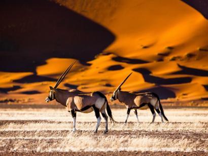 Reise in Namibia, Oryx-Antilopen im Sossusvlei
