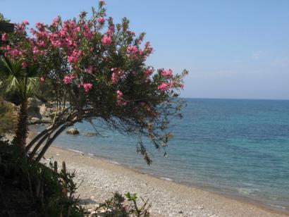 Reise in Zypern, Oleander am Strand bei Polis in der Nähe unserer Unterkunft