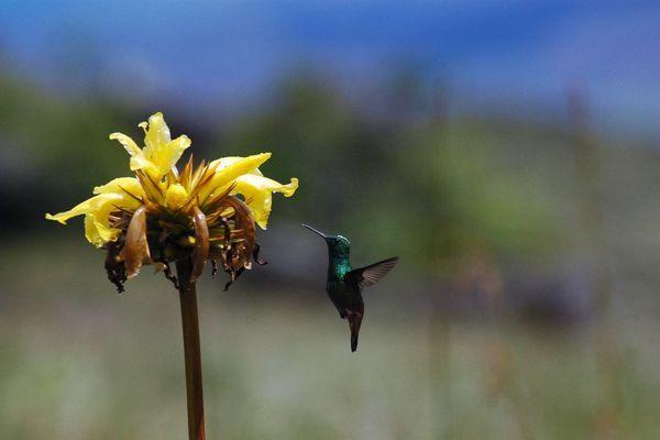 Atlantischer Regenwald – das grüne Herz Brasiliens