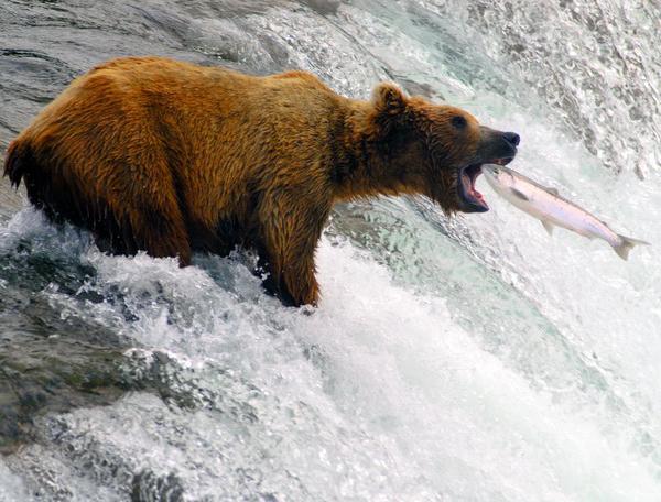 Reise in Kanada, Alaska & Kanada: Wildnis und Mitternachtssonne