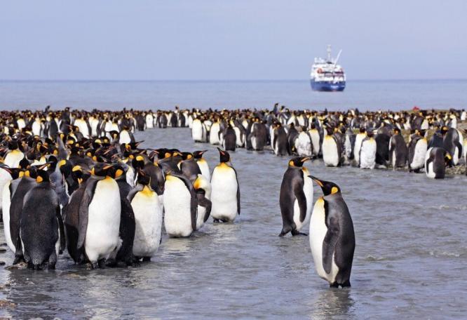 Reise in Antarktis, Kleines Gehöft auf Tristan da Cunha