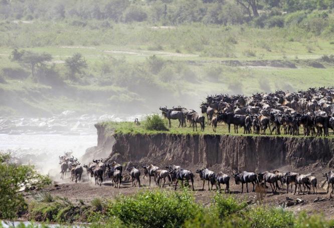 Reise in Kenia, Wachsame Löwin