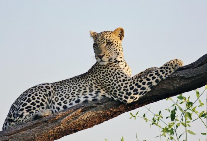 Reise in Kenia, Straußenbegegnung in der Savanne