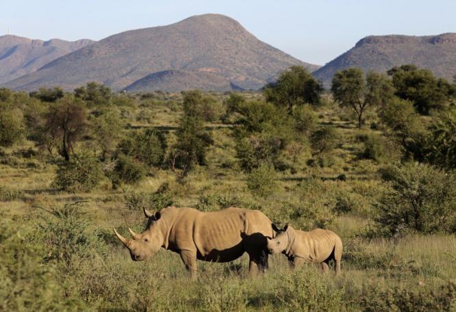 Reise in Namibia, Nashorn auf Pirschfahrt auf GocheGanas 5