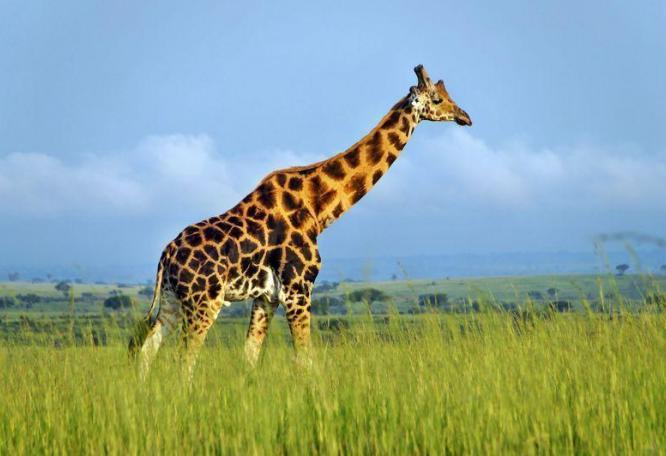 Reise in Uganda, Best of Uganda