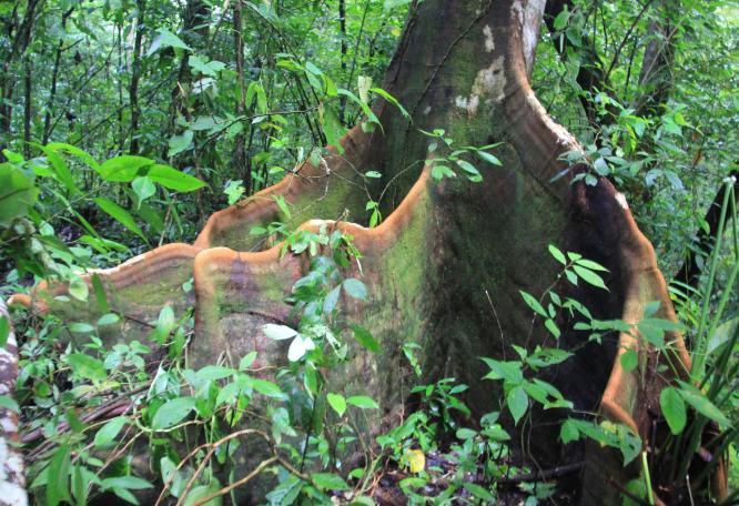Reise in Costa Rica, Monte_Alto__8_.JPG