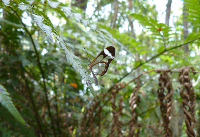 Reise in Kuba, avenTOURa_Schmetterling.jpg