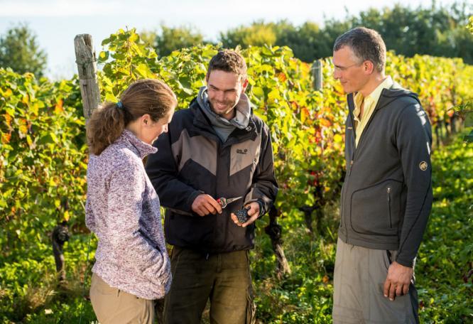 Reise in Deutschland, Deutschland: Weinwandern an der Ahr