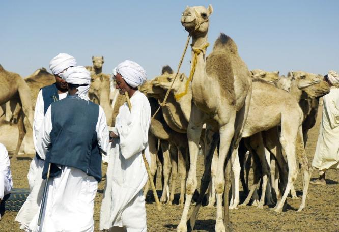 Reise in Sudan, Kamelmarkt Omdurman
