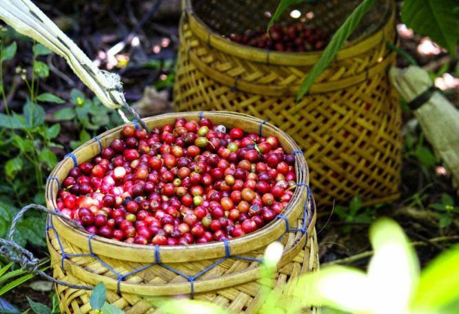 Reise in Vietnam, Munduk Moding Plantation