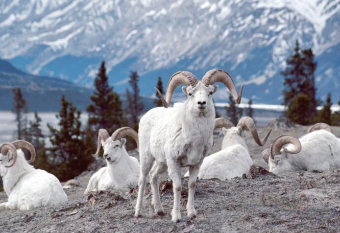 Reise in Kanada, Höhepunkte des Yukon und Alaskas Naturrundreise