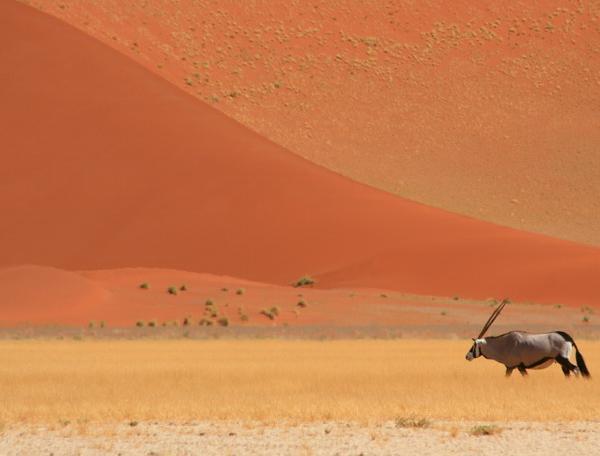 Reise in Namibia, Höhepunkte Namibias - Hotel- und Lodgetour