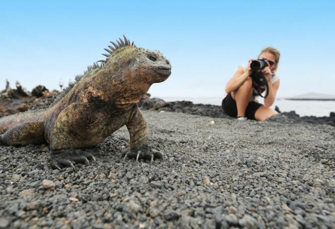 Reise in Ecuador, In den Regenwald und auf Galapagos-Kreuzfahrt Naturreise und Safari