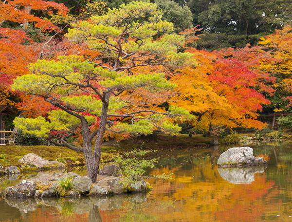 Reise in Japan, Japanischer Garten im Herbstkleid in Kyoto