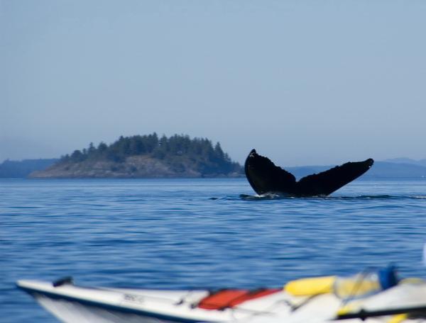 Reise in Kanada, Kanada - Neufundland & Nova Scotia – Naturerlebnis am Atlantik