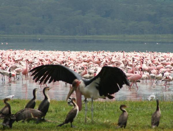 Reise in Kenia, Kenia - Jenseits von Afrika