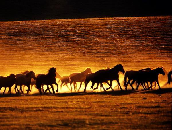 Reise in Mongolei, Mongolei - Erben des Dschingis Khan