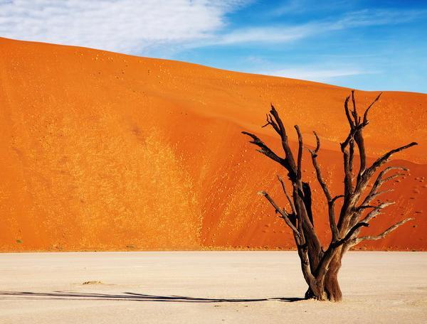 Reise in Botswana, Namibia & Botswana - Wüste, Weite und Wildnis pur (Camping)