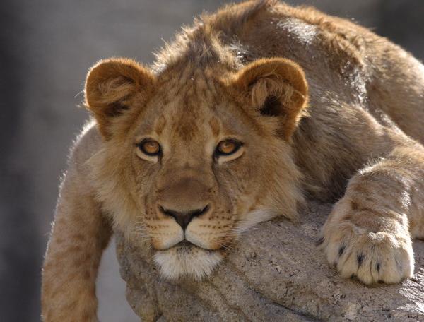 Reise in Botswana, Namibia & Botswana - Wüste, Weite und Wildnis pur (feste Unterkünfte)