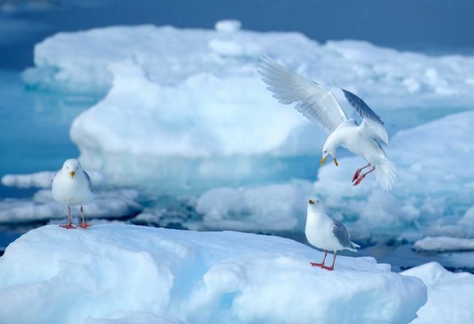 Reise in Niederlande, Nordatlantik-Querung: Auf dem Seeweg nach Spitzbergen Expeditionskreuzfahrt