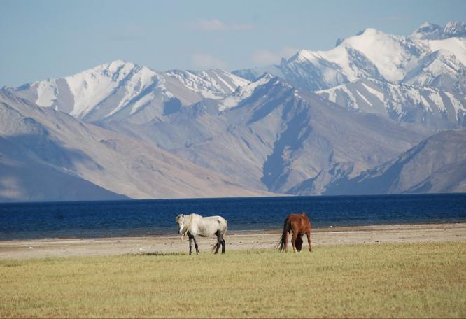 Reise in Indien, Spiti, Tsomoriri und Ladakh - Trekking und buddhistische Kultur im Himalaya
