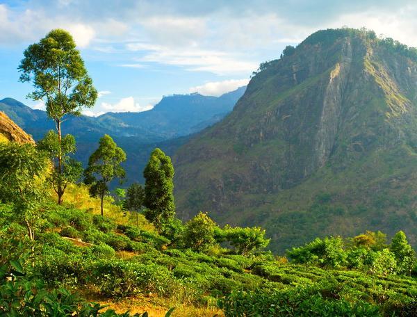 Reise in Sri Lanka, Sri Lanka - Summertimes auf der Tropeninsel