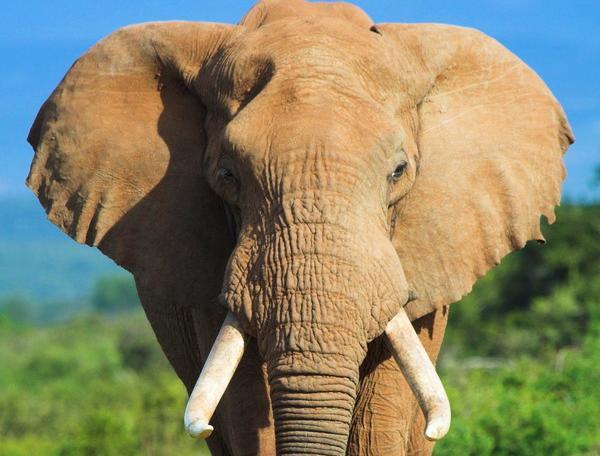 Reise in Südafrika, Südafrika - Overland Explorer