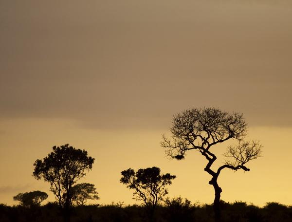 Reise in Botswana, Südafrika, Simbabwe & Botswana - Tierparadies mit tosenden Wasserfällen (feste Unterkünfte)