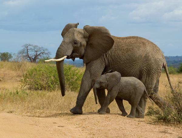 Reise in Tansania, Tansania - Wilder Süden