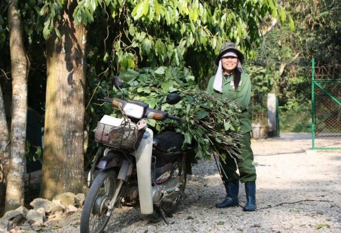 Reise in Vietnam, Vietnam - Primate Rescue Center