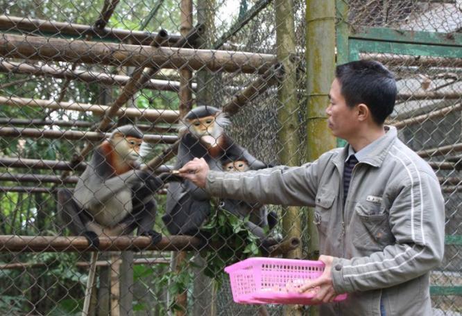 Reise in Vietnam, Mitarbeiter des EPRC füttert Primaten in Vietnam