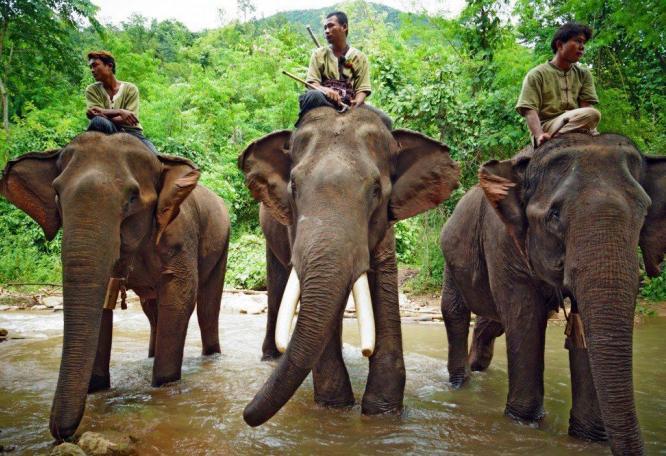 Reise in Myanmar, Burmesisches Portait
