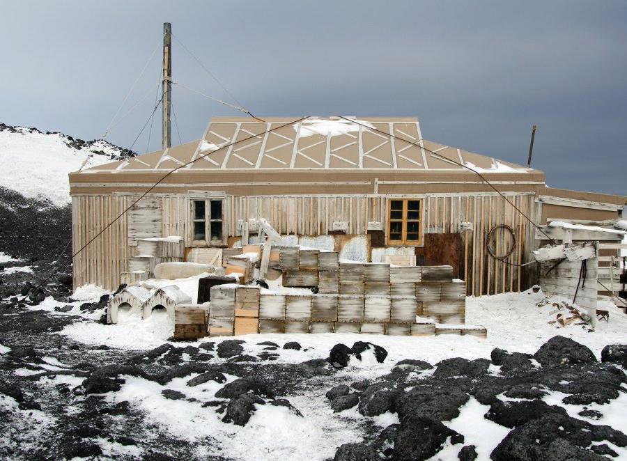 Reise in Antarktis, Hautnah an der Pinguinkolonie